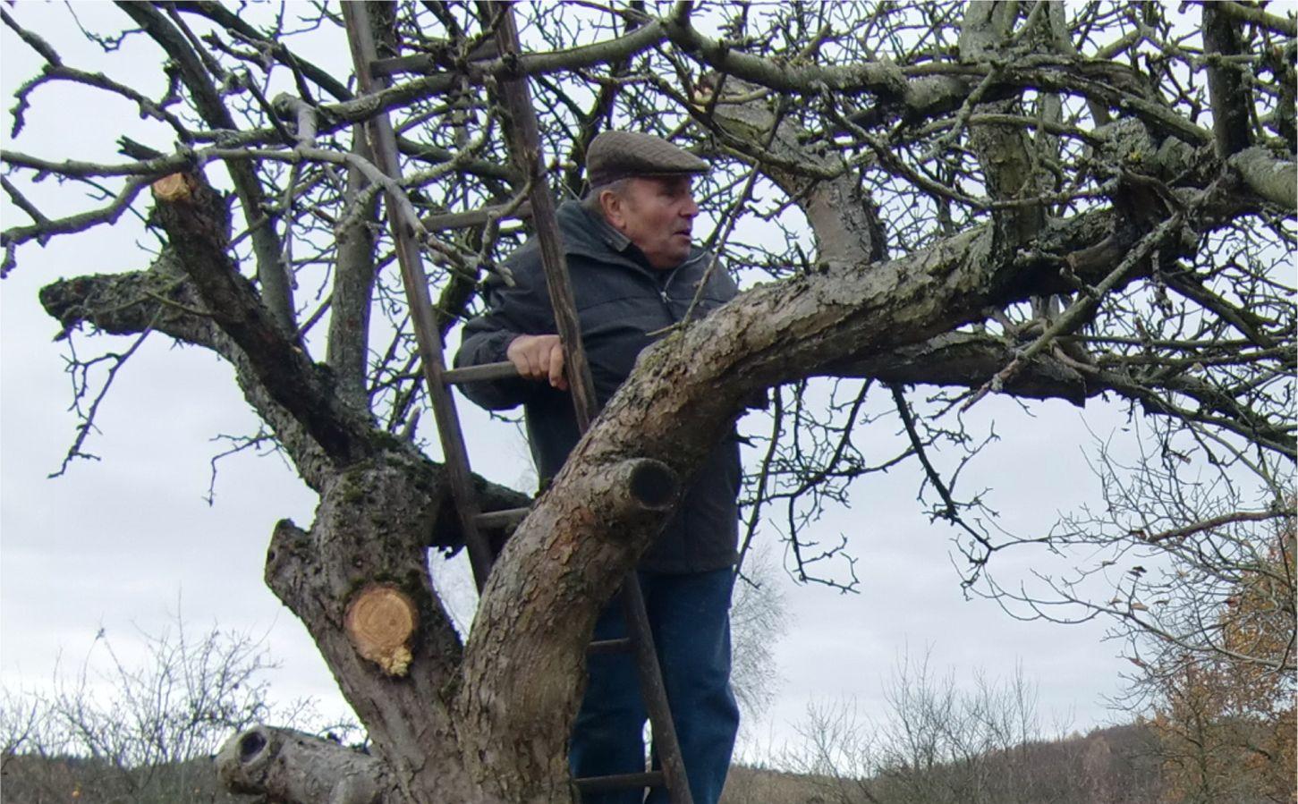 wann bäume schneiden